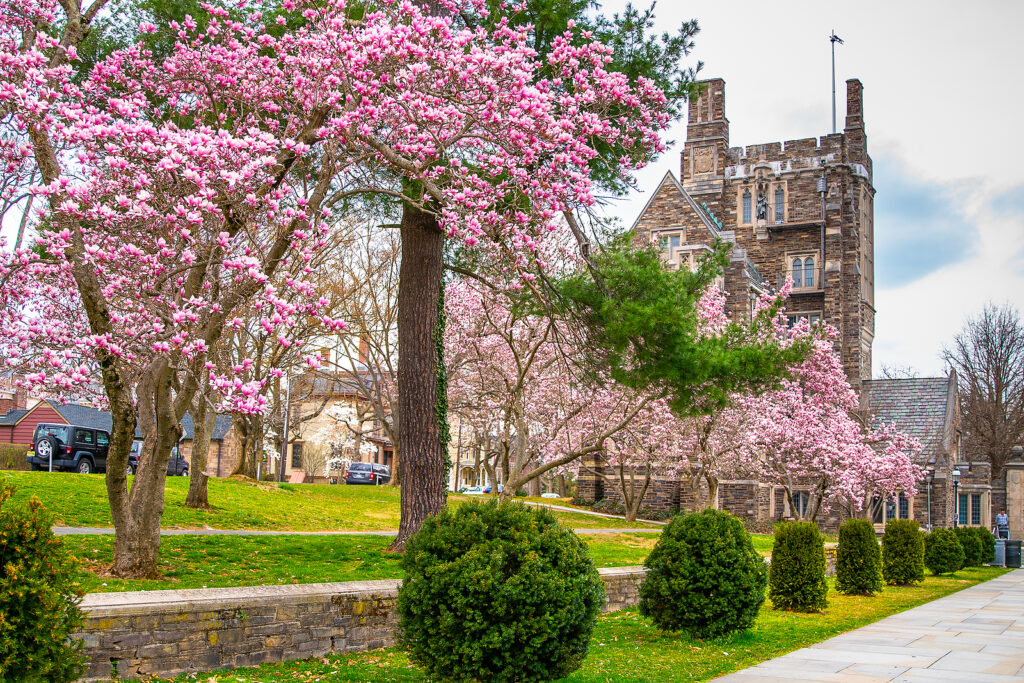 Therapy at Home in Princeton , New Jersey